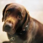 Divorce Helper - Custody battle over pet, sad dog