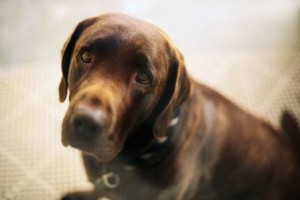 Pet custody is often put off till the end of divorce proceedings.
